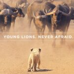 Young Lions Film  Panamericana
